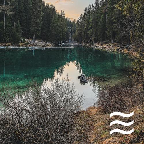 Foresty Rain Sounds - Focus Sleepful Sounds of Rain  (2020)